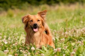 VitaliTier - Hunde