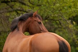 Behandlung eines Pferdes